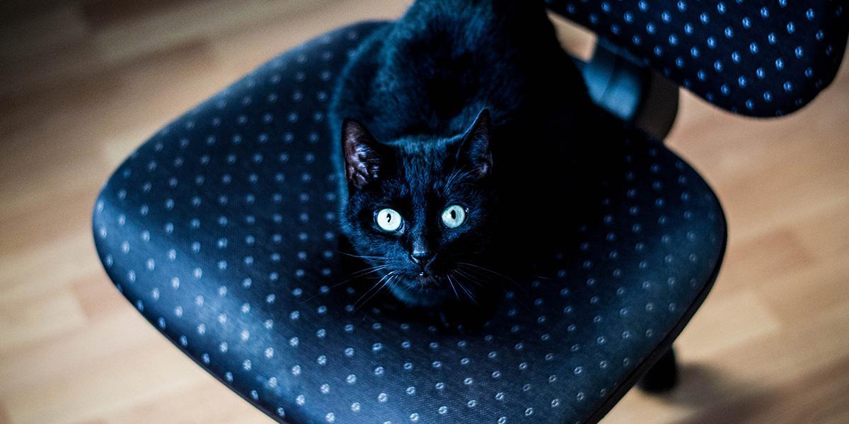 Am 8 August War Weltkatzentag Wir Haben Mal Das Netz